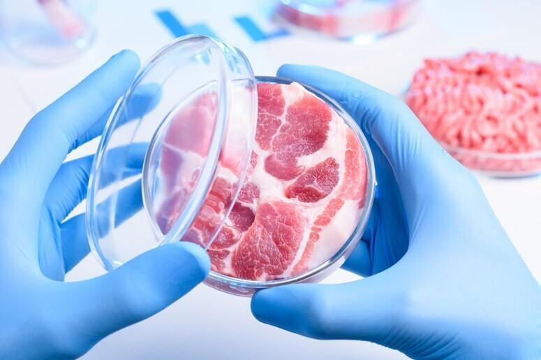 культивируемое мясо